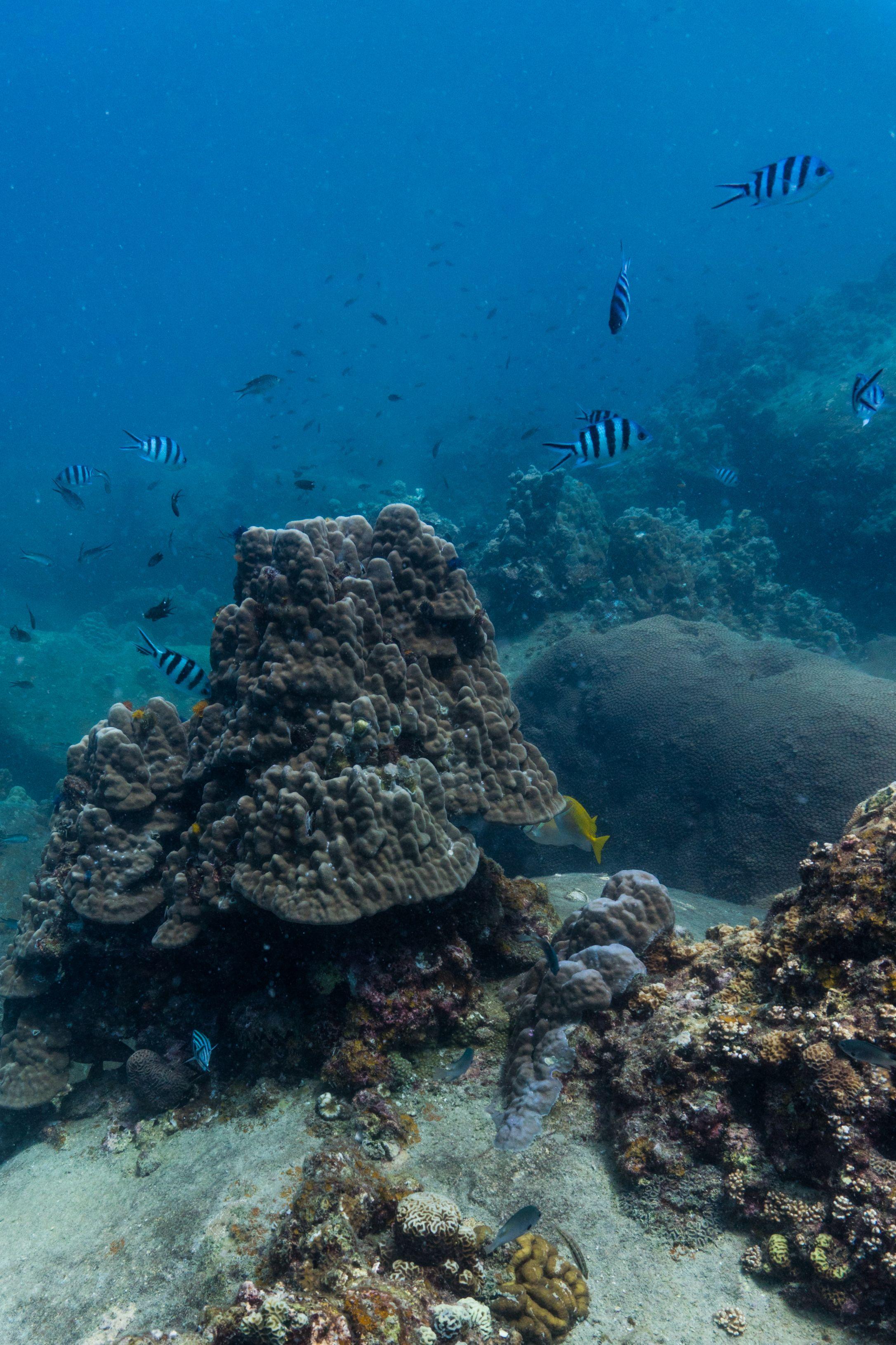 Thailand Tauchen Und Schnorcheln In Der Schonste Bucht Von Koh Tao Tauchen Thailand Thailand Und Bucht