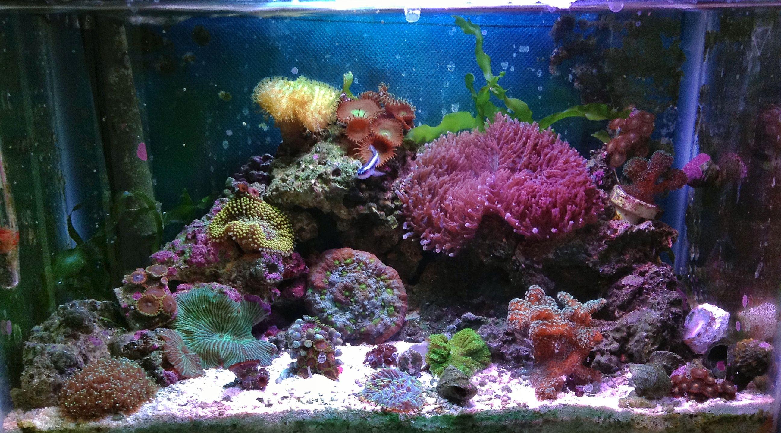 Picotope reef Aquarium Inspiration Pinterest