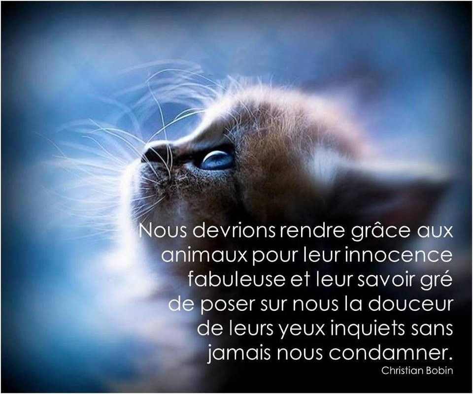 Christian BOBIN (avec images) | Citation animaux, Regard animal ...