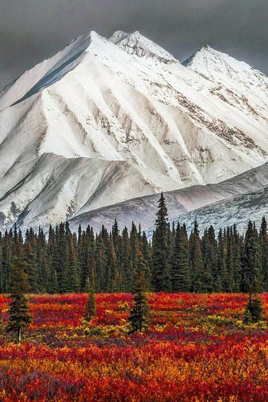 10 Reasons That Denali National Park Should Be On Your Pail Listing is part of Alaska winter - In the huge wild of Alaska, Denali is a crown jewel among America's National Parks  Covering more than 6 million acres, this large park encompasses the top of Denali, and its surrounding glac…