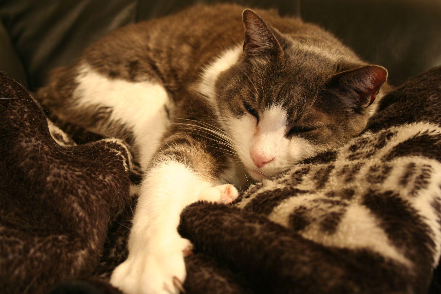 Can a Cat's Purr Stimulate Healing? Cat purr, Cats, Purring