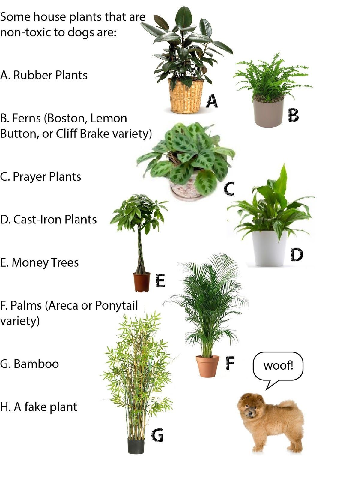 50 House Plants Safe For Cats Children Indoor Plants Pet