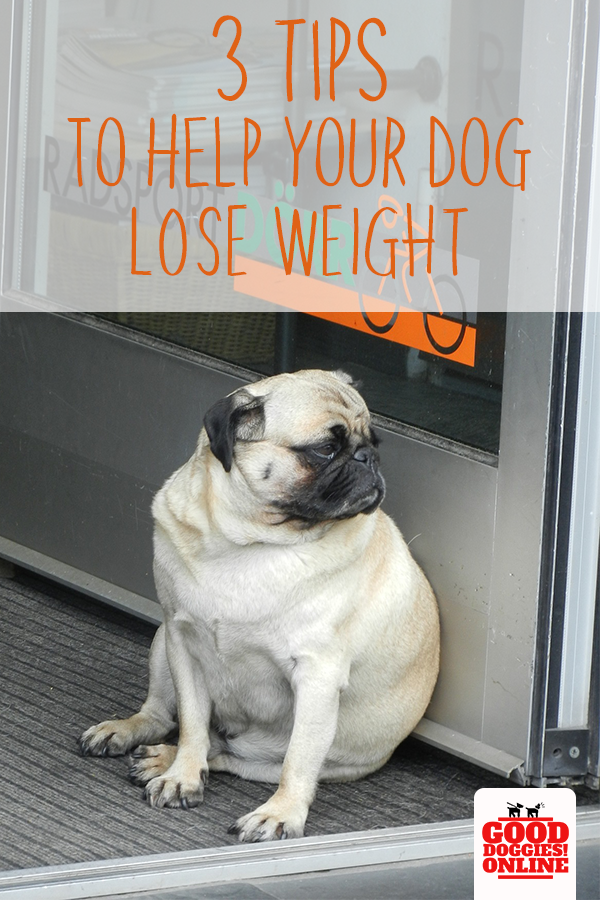 4aa1400985f5d2c754d9db61c55177a8 - How To Get My Overweight Dog To Lose Weight