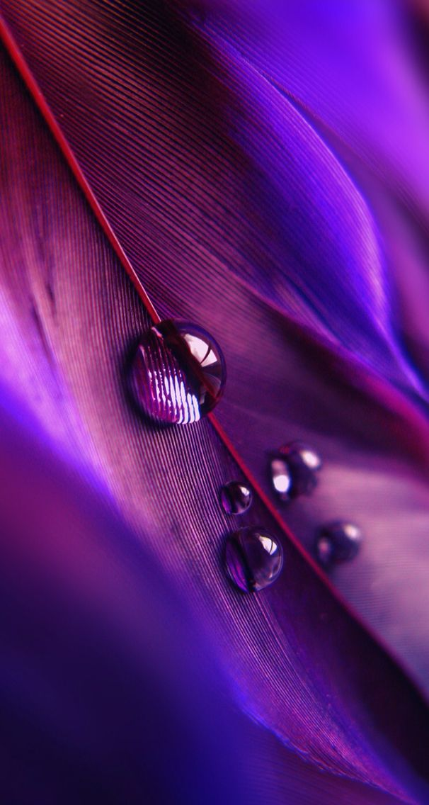 Macro Photography Of A Feather With Water Droplets Ios8 Hd