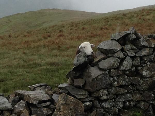 Come Walk With Me UK spotted this nosey fella on the fells today.  :-)