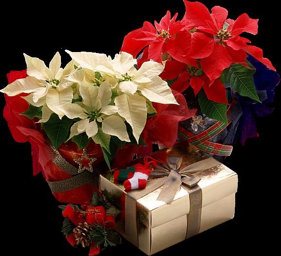 Resultado de imagem para tubes de flores de Natal