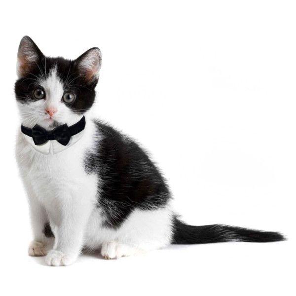 Platinum Pets Formal Bow Tie Cat Collar Collars Petsmart Cat Collars Cat Bowtie Collar Cat Bow Tie