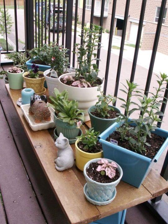 Flickr Finds A Growing Patio Garden Apartment Patio Gardens 400 x 300