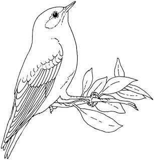Adventures On Beck S Bounty The Eastern Bluebird Bird Drawings Bird Coloring Pages Pyrography Patterns