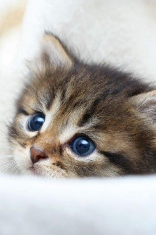 31 Baby Katzen Baby Katzen Katzenbabys Katzen