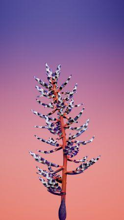 Iphone X Wallpapers Iphone 8 Flower Ios11 Retina 4k Hd Wwdc 2017 Vertical Flower Iphone Wallpaper Apple Illustration Ios 11 Wallpaper Flower wallpaper vertical hd