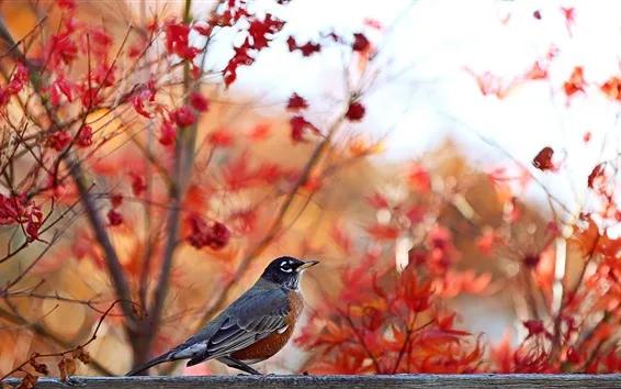 Cliquez Pour Voir La Resolution D Origine Fonds D Ecran Fond D Arbre Animaux Et Oiseaux Fond Ecran