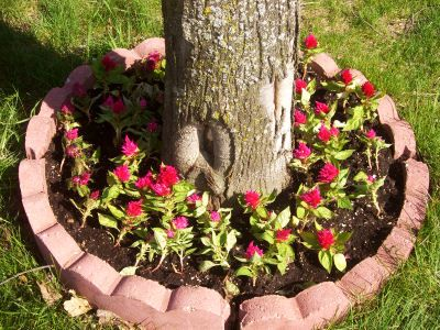 garden ideas how to plant flowers around a tree