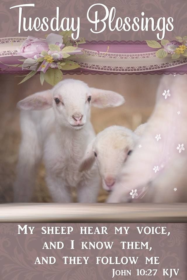 My sheep hear my voice, & I know them, & they follow me