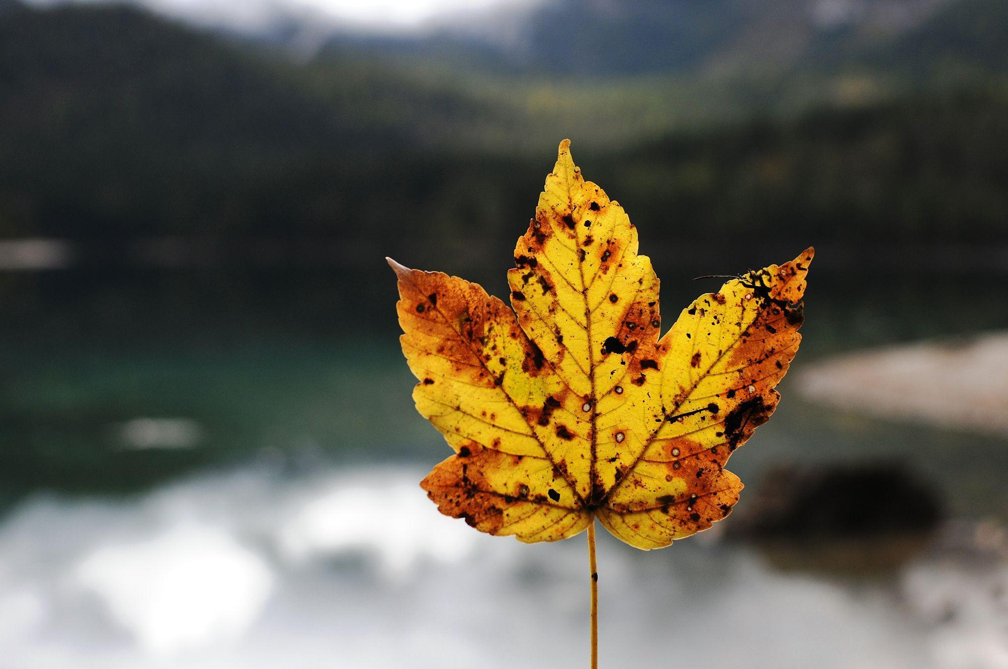 Fall in Tovel Lake  Travel photo by eduocione http://rarme.com/?F9gZi