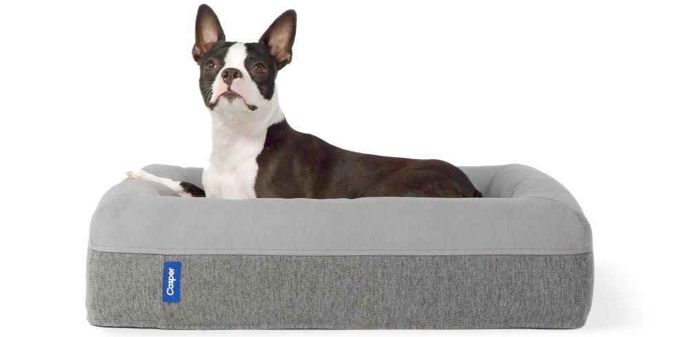 People Are Declaring This The World S Best Dog Bed Dogs Dog Bed Sleeping Dogs