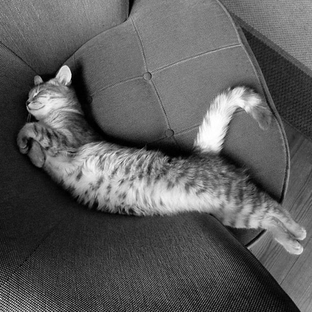 We feel just like this today, we're not moving an inch x #sunday #lazyday #cat #kitten #catsofinstagram #instacat #instacool #trend #cute #funny #inspiration #lazy