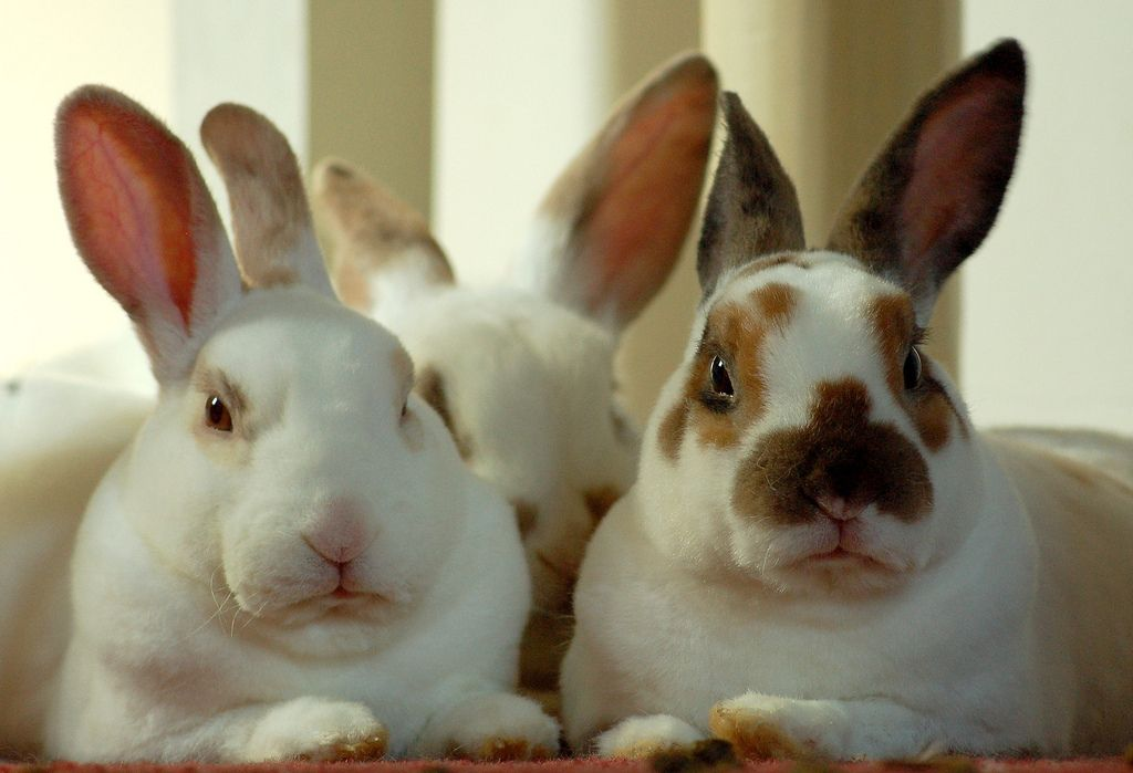 Judgmental bunnies disapprove of your new boyfriend for the love judgmental bunnies disapprove of your new boyfriend easter giftibizan negle Choice Image