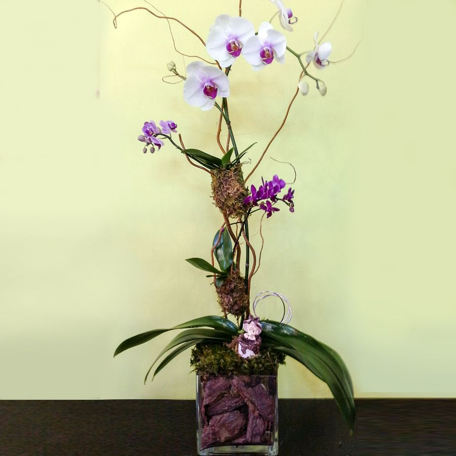 Just For You Baby Phalaenopsis Orchid Arrangement Orchid Arrangements Phalaenopsis Orchid Orchids