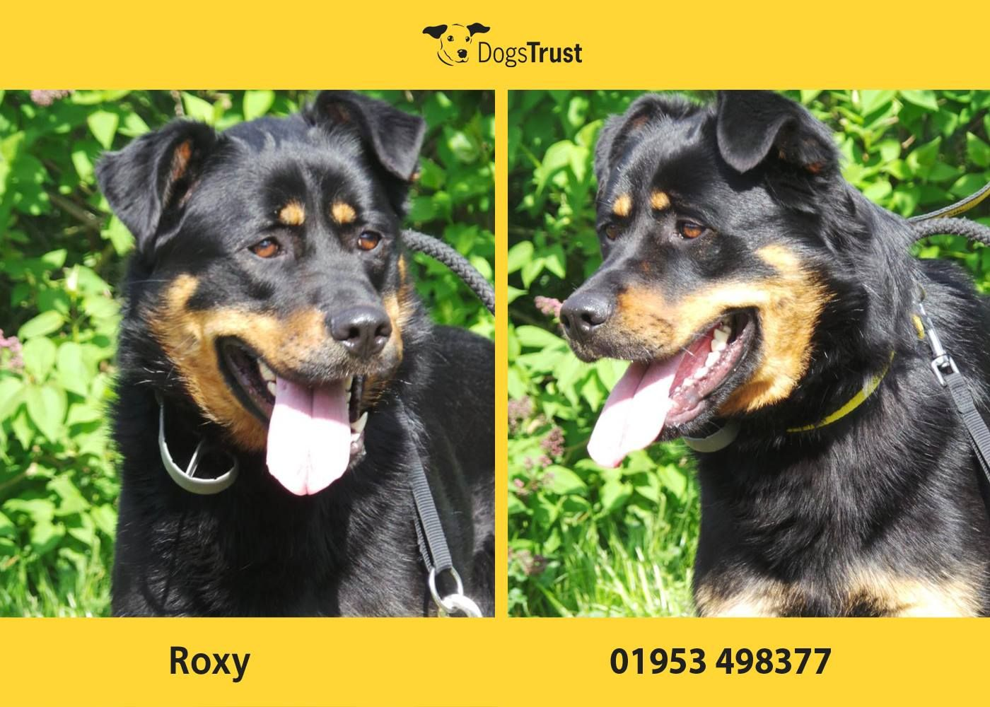 Meet Roxy From Dogs Trust Snetterton She S A Shy Girl Who Takes