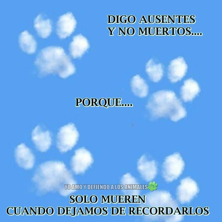 Precioso Perros Perros En El Cielo Y Amantes De Perros