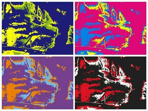 Warhol kitty | Blue Fever Blog