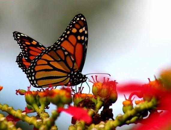Pin By Sharon Huffman On Photography Bug Life Beautiful Photography Nature Nature Photography Beautiful Nature