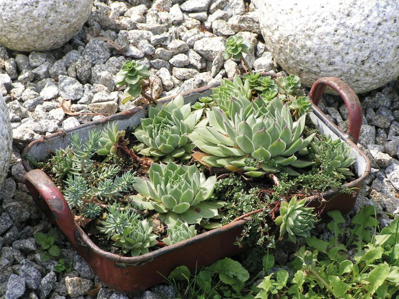 Photo of Deko-Ideen: Shabby Chic für den Garten