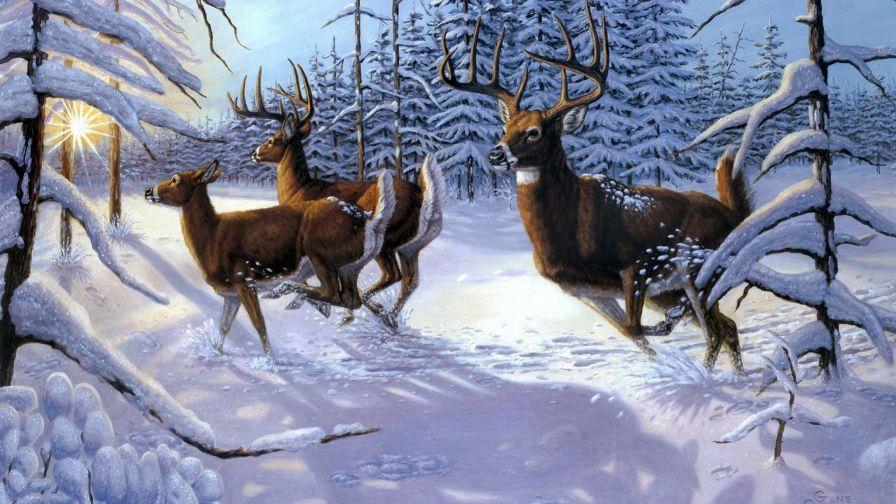Deers in the snow HD Wallpaper Deer wallpaper, Deer