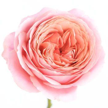 Garden Pink Romantic Antike