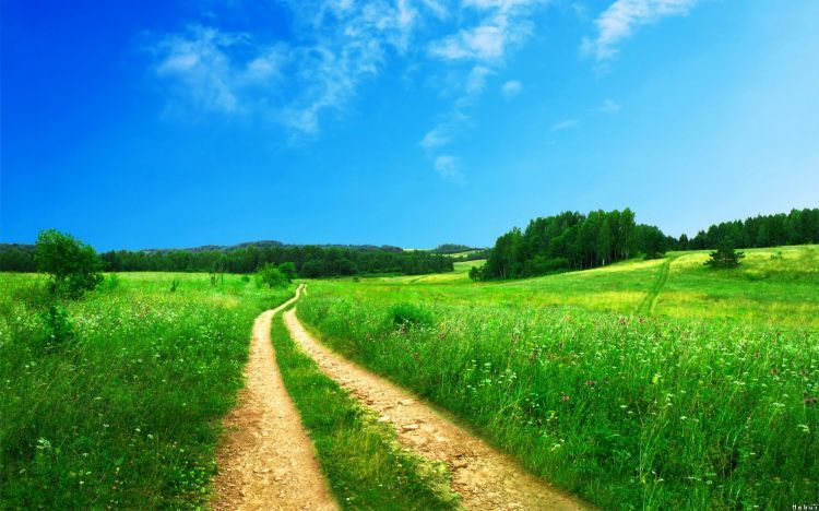 Wallpapers Nature Wallpapers Paths Wallpaper N300466 By