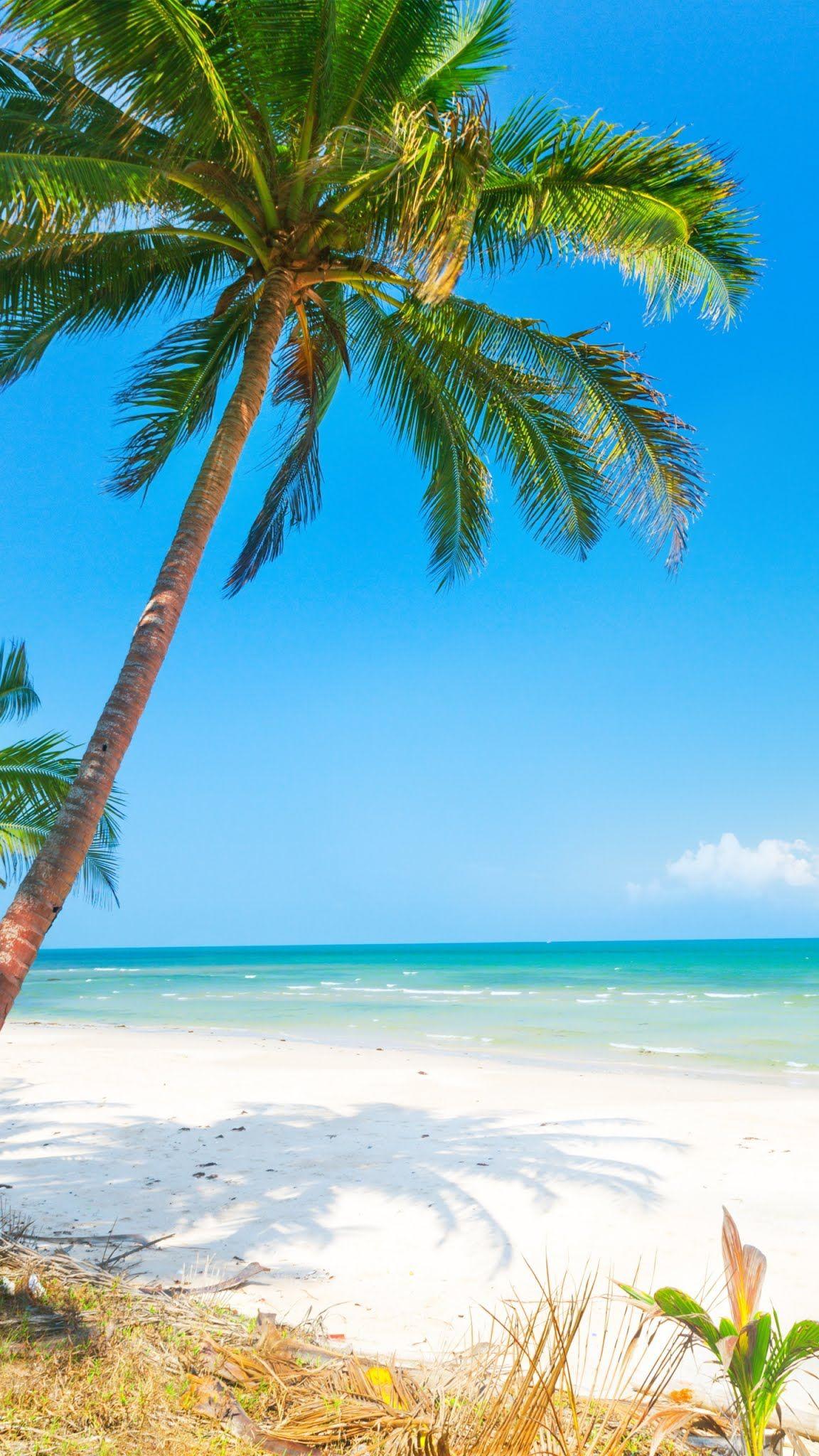 Beautiful Beach Mobile Wallpaper Palm Tree Sand Nature Horizon Beach Wallpaper Mobile Wallpaper Beautiful Beaches