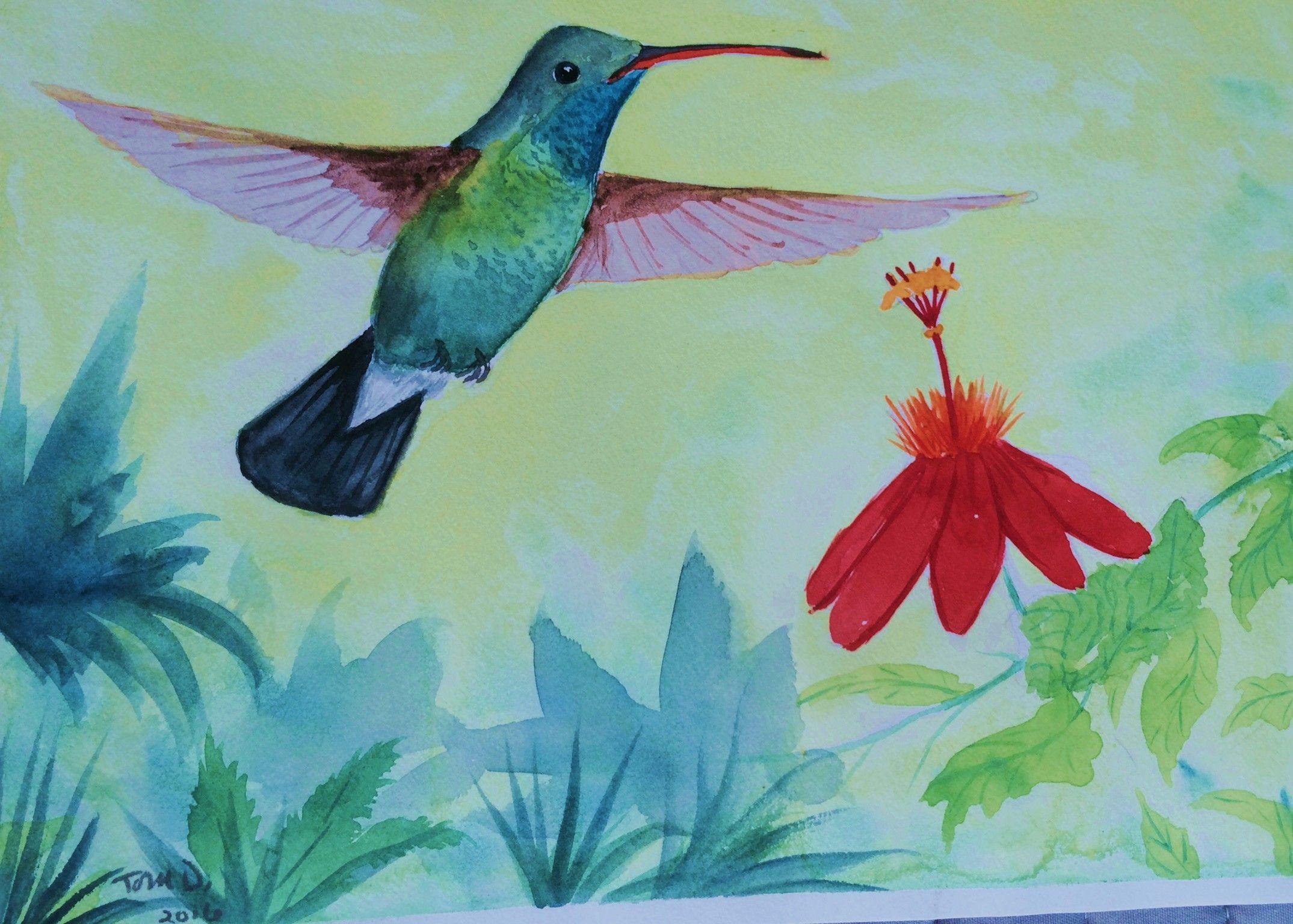 Broadbilled hummingbird yuma az apr 11 1993 85x6