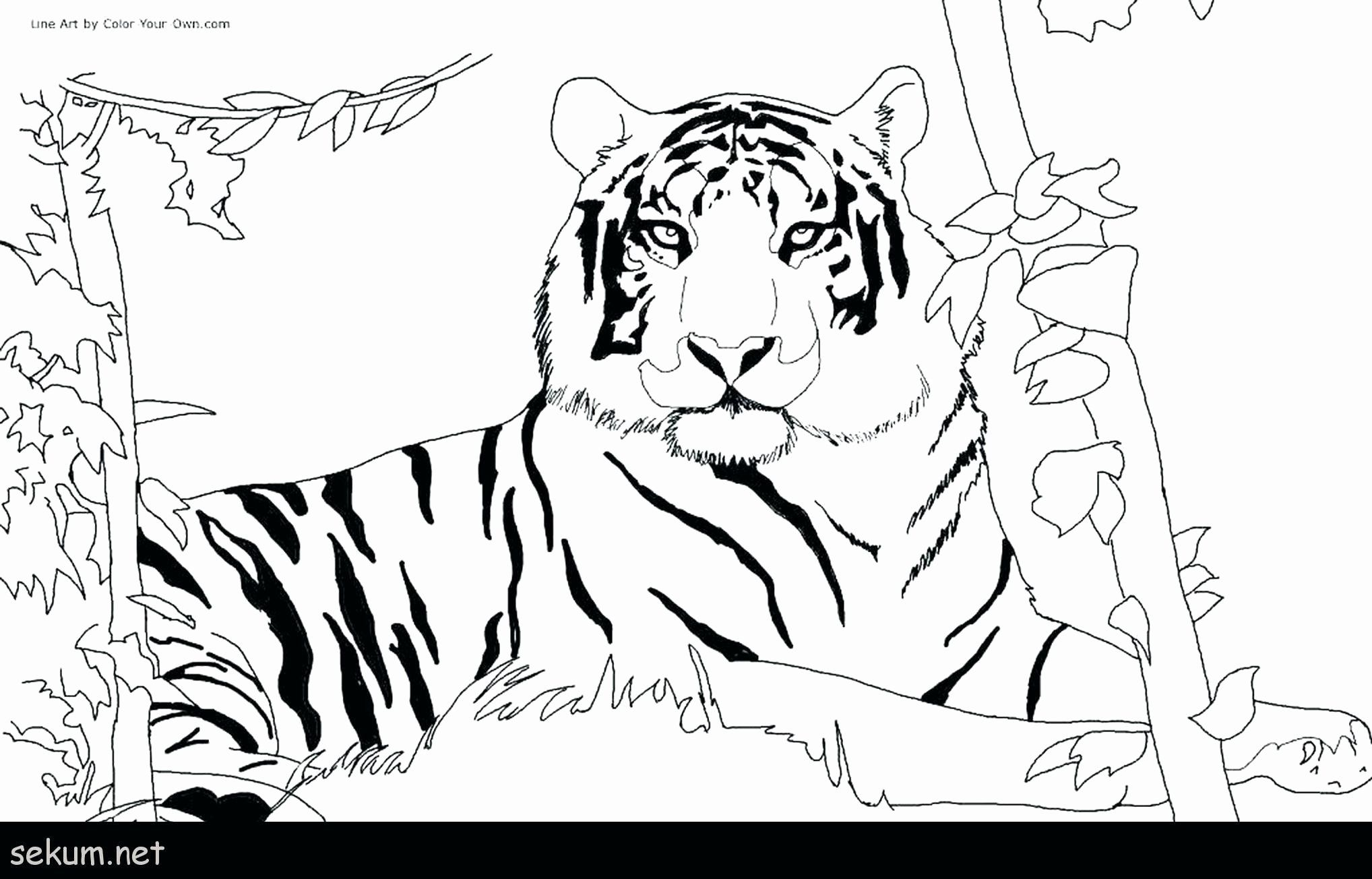 Animal Coloring Pages For 10 Year Olds Lovely Unique Tiger