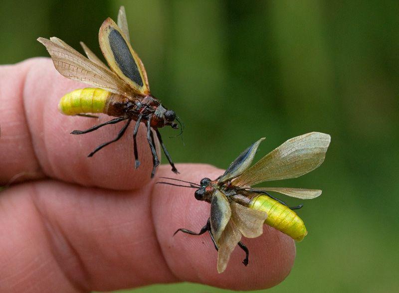 ligtning bug | Realistic Fireflies / Lightning bugs ...