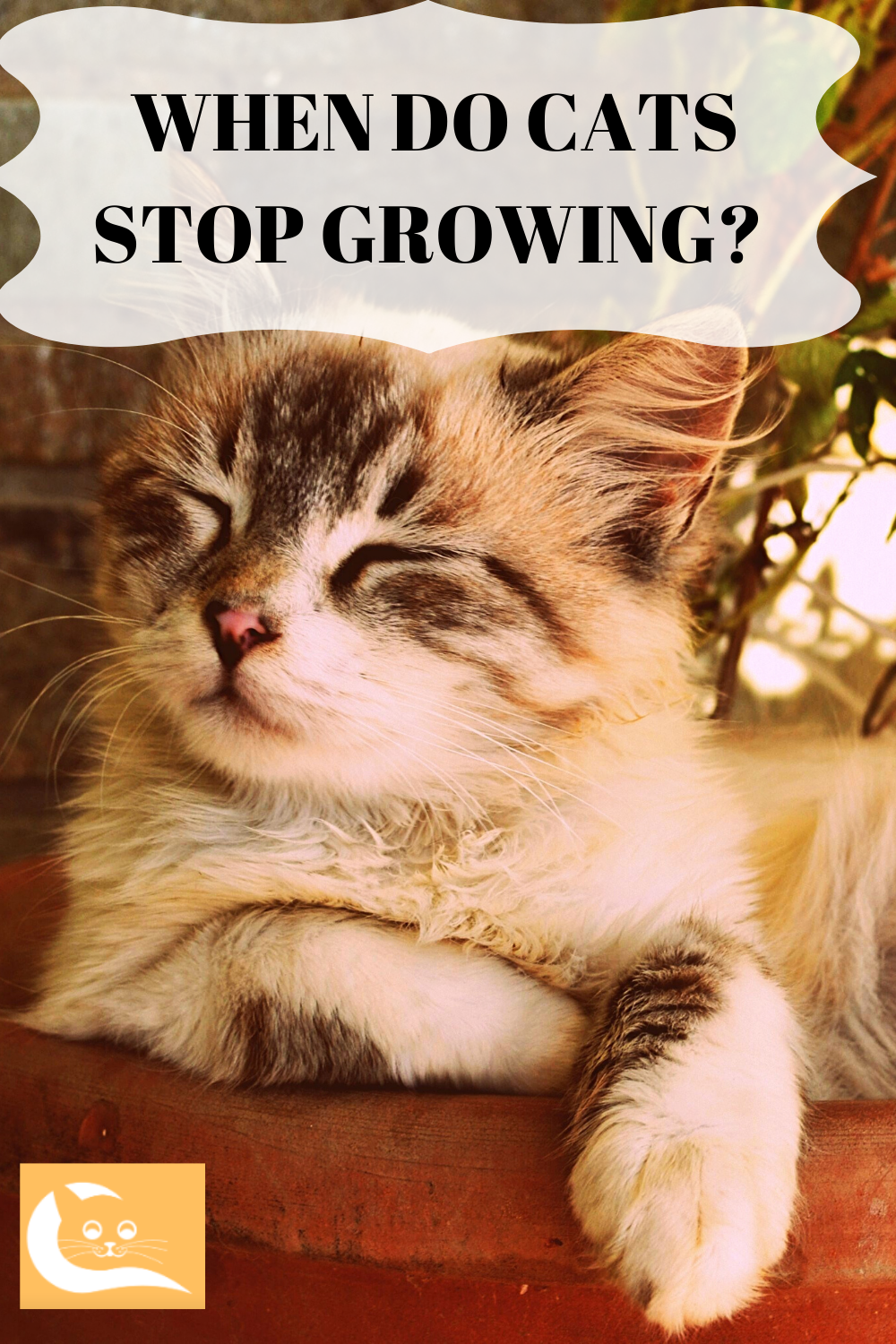 When Do Cats Stop Growing With Images Cat Facts Cats Kitten Care