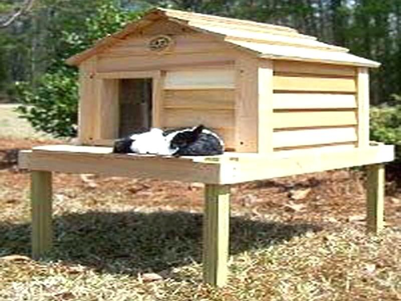 How To Build An Outdoor Cat House Outdoor Cat House For Winter