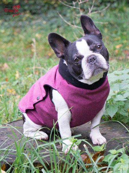 Hundemantel aus Softshell   Schöne hunde, Französische bulldoggen ...