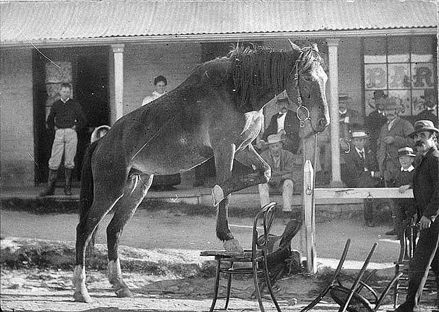 Performing horse in front of Telegraph Hotel in Manners Street - Tenterfield, NSW. ca. 1895 / Alfred Benjamin Butler | Flickr - Photo Sharing!