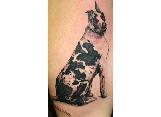 Great Dane Harlequin Dog Tattoos Great Dane Tattoos