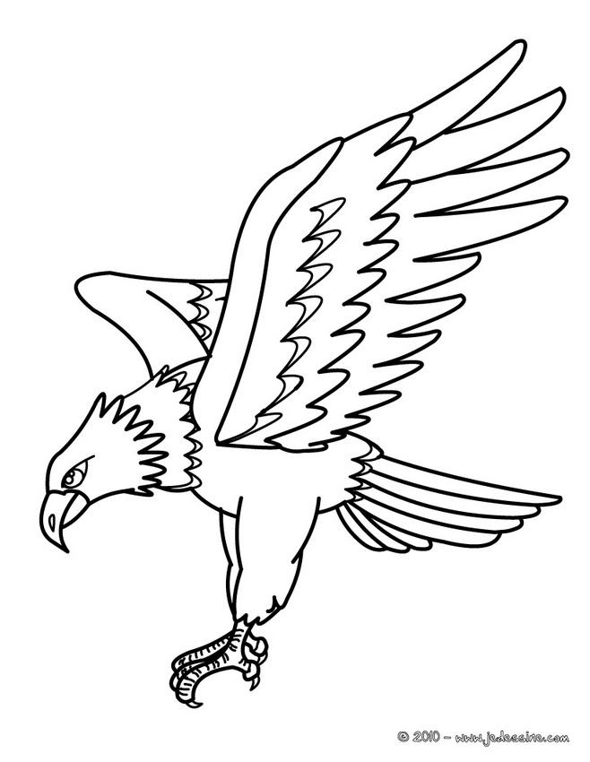 Coloriage D Oiseaux Coloriage D Un Aigle Pygargue Az En