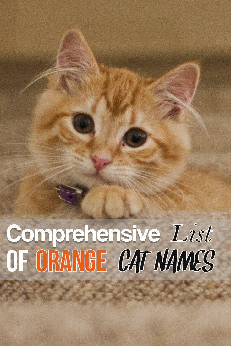 Comprehensive List of Orange Cat Names Orange tabby cats