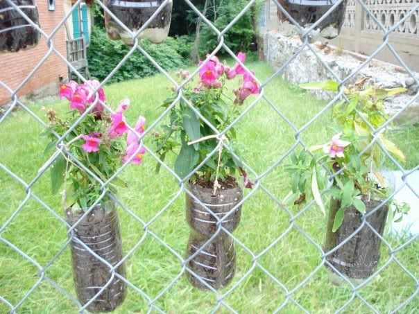 Container Garden On Chain Link. Good Upcycling Of Plastic Bottles But I May  Use Other Small Pots And Hang On Outer Side Of My Dog Run To Keep Dog Out  Of The ...
