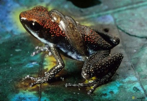 Frog Rainforest Animals Wallpaper