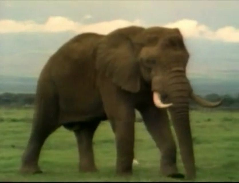 asian National elephants geographic