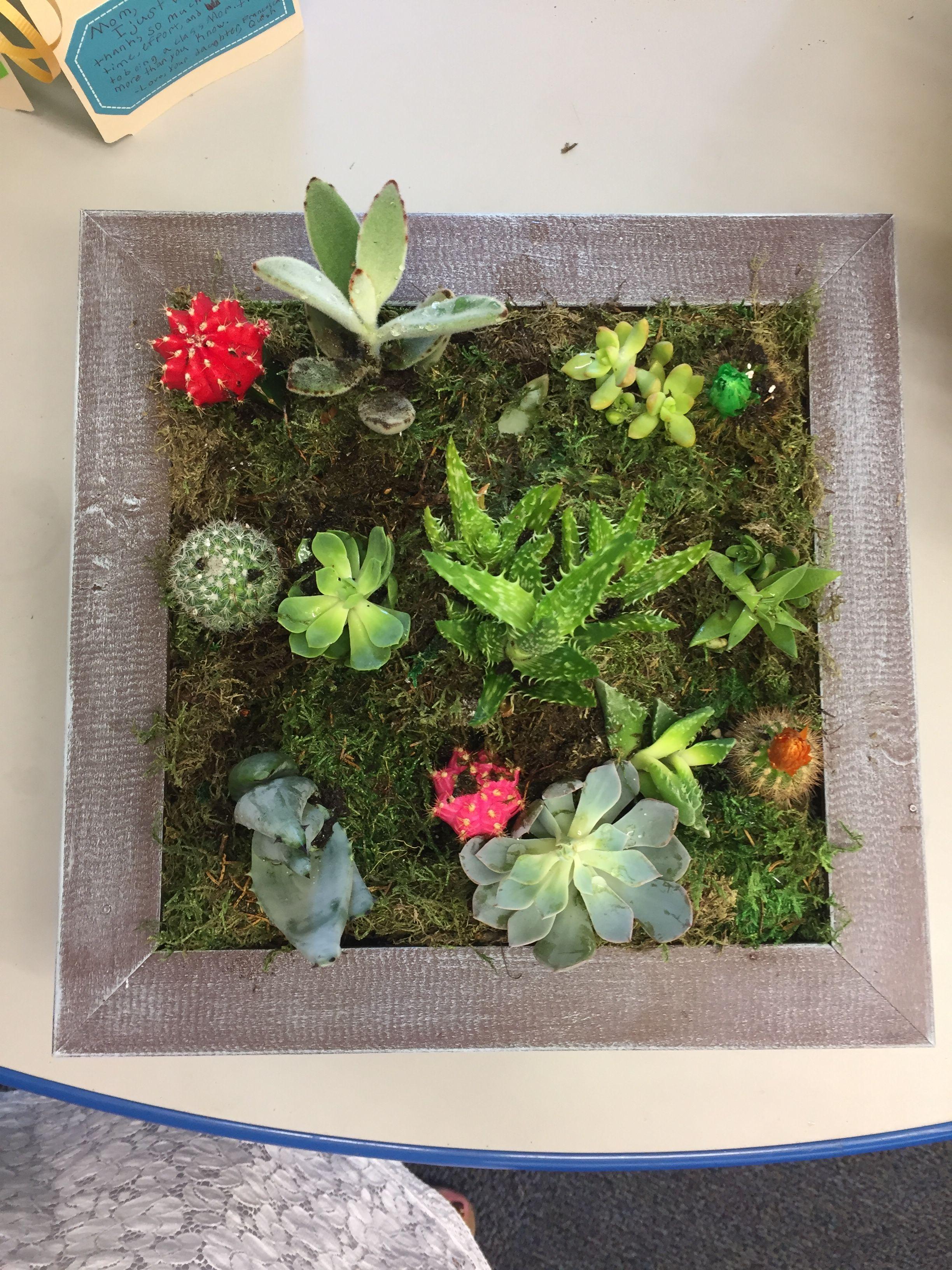 Planters, Succulents, Herb Garden Planter, Plant, Pots, Container Plants