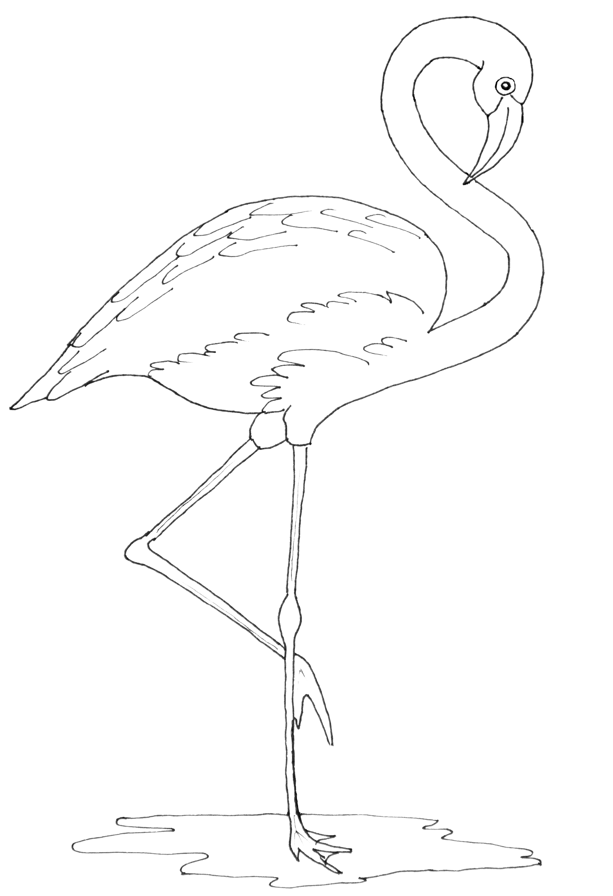 Malvorlage Flamingo Einfach - tiffanylovesbooks