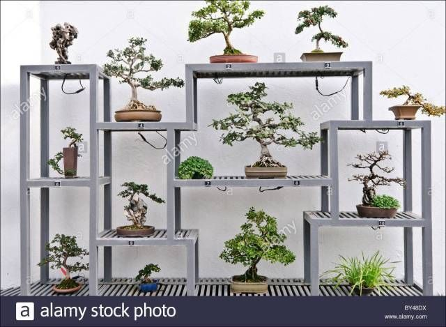 indoor bonsai garden bonsaitrees bonsai bonsai baum natur und garten. Black Bedroom Furniture Sets. Home Design Ideas