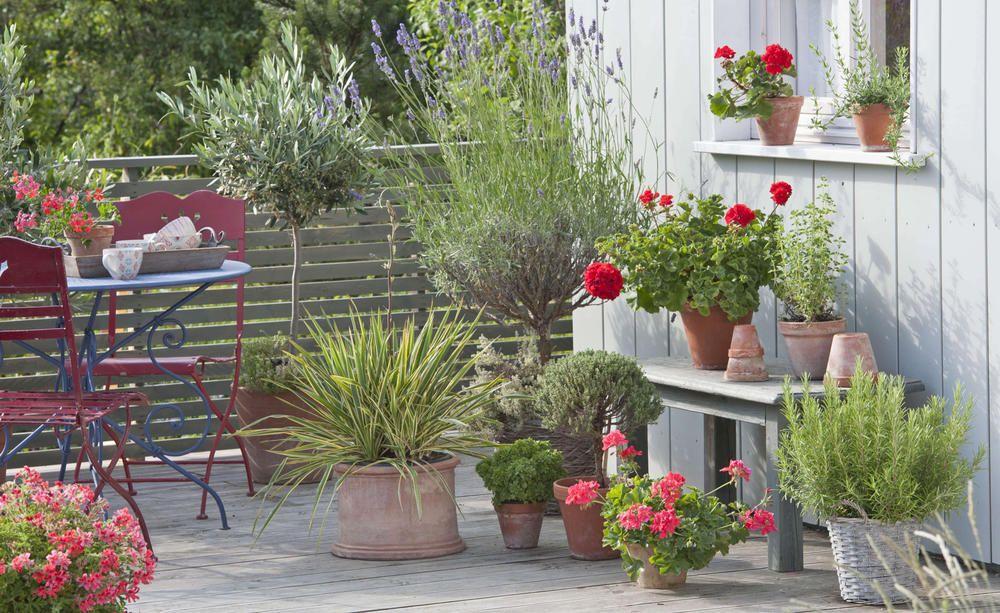 balkonpflanzen f r die pralle sonne sommer balkon. Black Bedroom Furniture Sets. Home Design Ideas