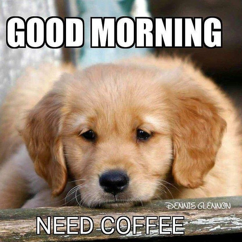 Golden Coffee Lover In 2021 Good Morning Dog Good Morning Animals Good Morning Puppy
